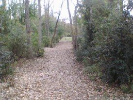 Tittabawassee Park, Main course, Hole 4 Tee pad