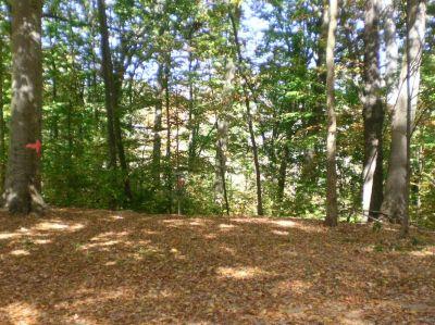 Fitzgerald Park, Main course, Hole 5 Short approach