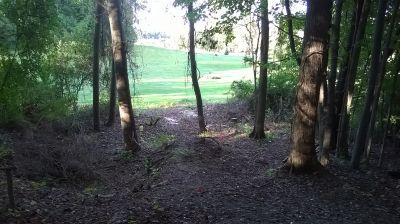 George Wilson Park, Main course, Hole 5 Tee pad