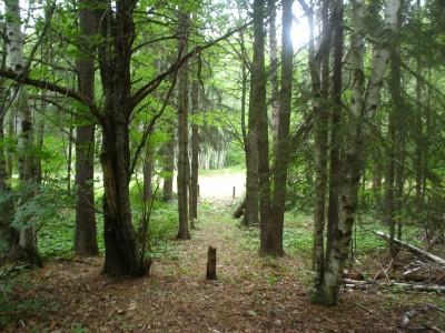 Silver Creek, Main course, Hole 8 Tee pad