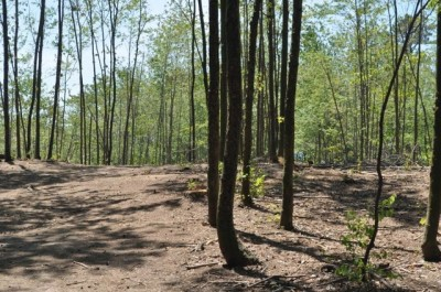 Winstrom Preserve, Main course, Hole 2 Tee pad