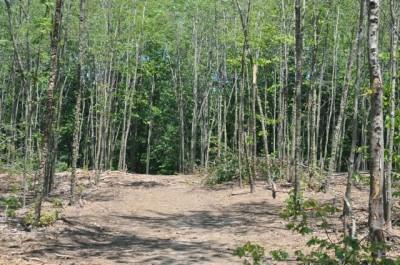 Winstrom Preserve, Main course, Hole 8 Tee pad