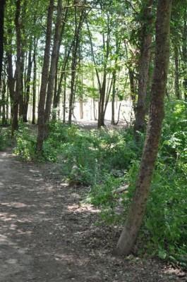 Winstrom Preserve, Main course, Hole 1 Tee pad