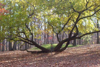 Bluemont Park, Main course, Hole 1 Putt