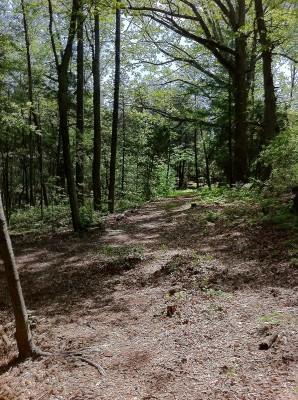 Greene Co. Community Park, Main course, Hole 4 Tee pad