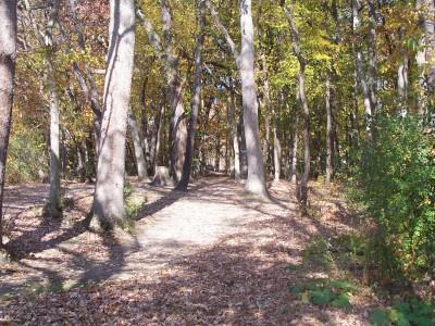 Knollwood Park, Main course, Hole 7 Short tee pad