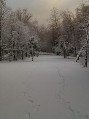 Oshtemo Township Park, Main course, Hole 7 Short tee pad
