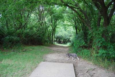 Gillies Creek Park, Main course, Hole 9 Tee pad