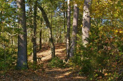 Bennett's Creek Park, Main course, Hole 7 Short tee pad
