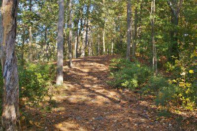 Bennett's Creek Park, Main course, Hole 5 Short tee pad