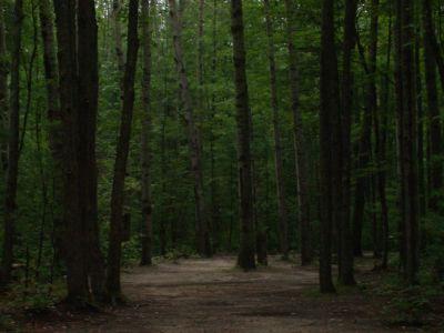 Log Lake Park, Main course, Hole 3 Midrange approach