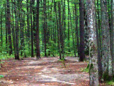 Log Lake Park, Main course, Hole 16 Midrange approach