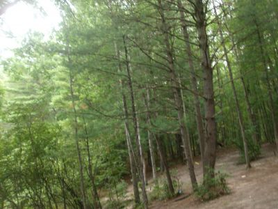 Log Lake Park, Main course, Hole 9 Short approach