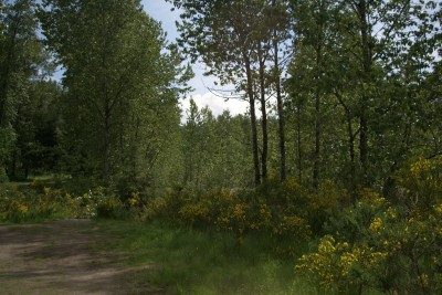 White River, Main course, Hole 16 Long tee pad