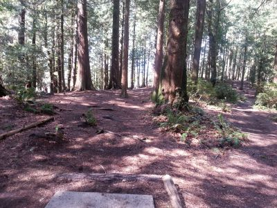 NAD Park, Main course, Hole 14 Short tee pad