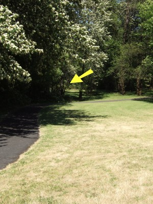 North Bonneville DGC, Main course, Hole 11 Tee pad