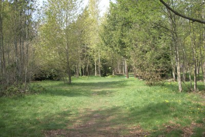 Seatac DGC, Main course, Hole 13 Tee pad