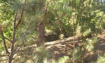 High Bridge Park, Main course, Hole 2 Midrange approach