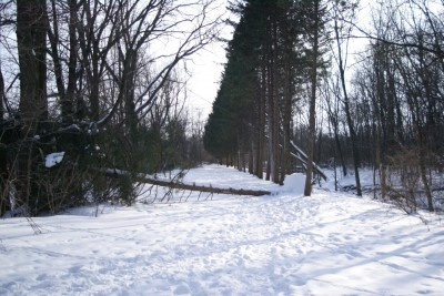 Grand Woods Park, Main course, Hole 8 Tee pad