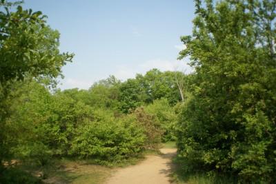 Grand Woods Park, Main course, Hole 15 Tee pad