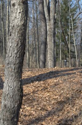 Addison Oaks County Park, Main course, Hole 6 Short approach