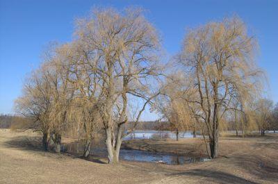 Addison Oaks County Park, Main course, Hole 1 Short approach