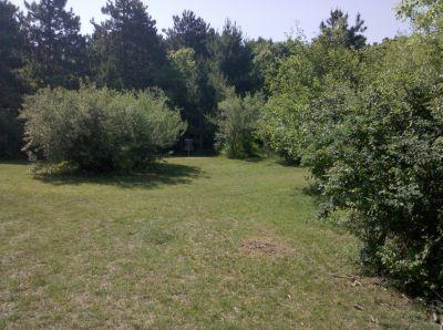 Fallasburg Park, Main course, Hole 8 Short approach