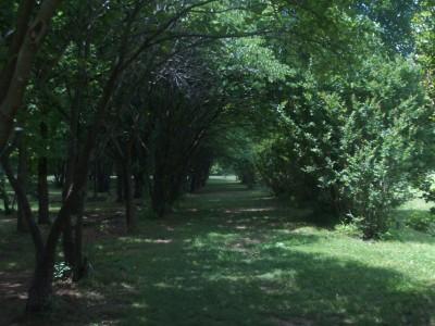 Hoyt Grove, Main course, Hole 5 Tee pad