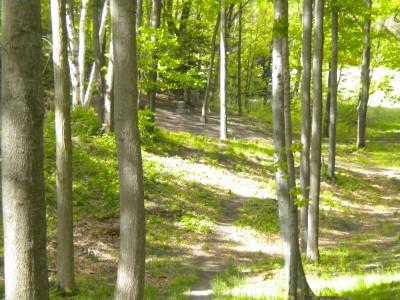 Mason County Park, Beauty, Hole 8 Tee pad