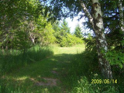 Mason County Park, Beast, Hole 16 Tee pad