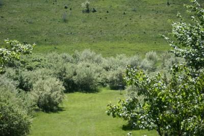 Mason County Park, Beast, Hole 3 Tee pad