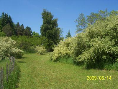 Mason County Park, Beast, Hole 7 Tee pad