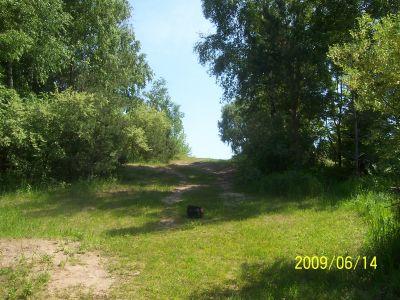 Mason County Park, Beast, Hole 9 Reverse (back up the fairway)