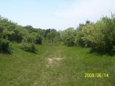 Mason County Park, Beast, Hole 4 Tee pad