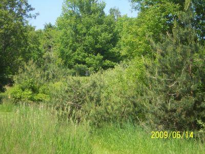 Mason County Park, Beast, Hole C Tee pad