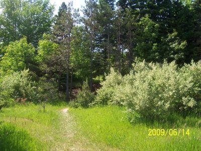 Mason County Park, Beast, Hole 8 Tee pad