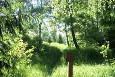 Mason County Park, Beast, Hole F Tee pad