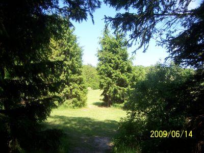 Mason County Park, Beast, Hole 15 Tee pad