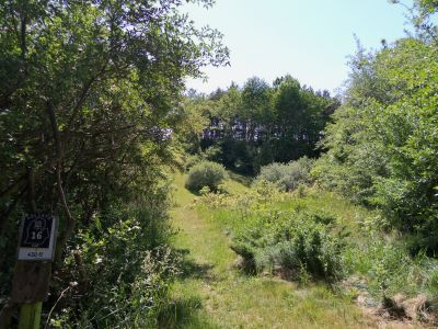 Mason County Park, Goliath, Hole 16 Tee pad