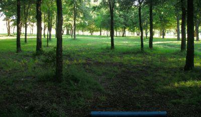 Bicentennial DGC, Main course, Hole 15 Short tee pad