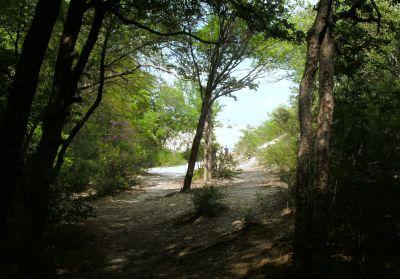 Z Boaz Park, Main course, Hole 2 Tee pad