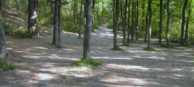 Z Boaz Park, Main course, Hole 11 Reverse (back up the fairway)
