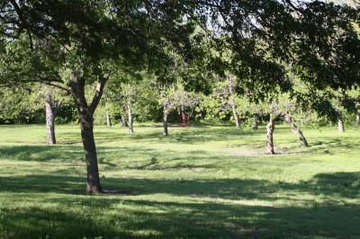 Audubon Park, Main course, Hole 6 Midrange approach