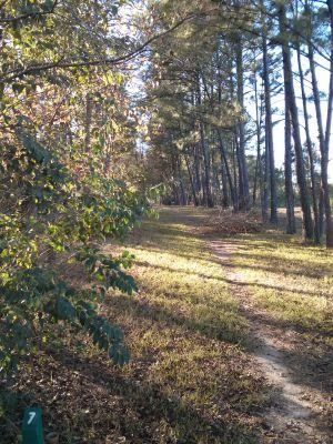 Mason Park, Main course, Hole 7 Long tee pad