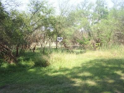 Live Oak City Park, Main course, Hole 11c Alternate pin