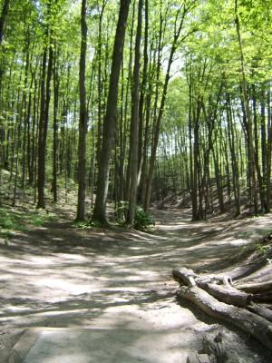 Hickory Hills, Main course, Hole 15 Tee pad