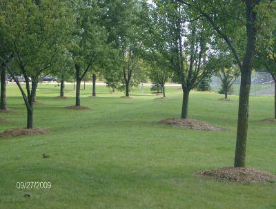Twin Creeks Park, Main course, Hole 7 Tee pad