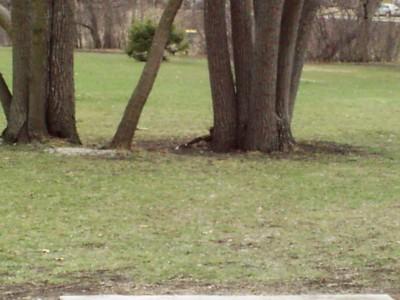 Prairie Park, Main course, Hole 2
