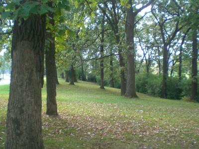 Shady Oaks Park, Main course, Hole 13 Tee pad
