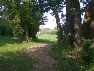 Shady Oaks Park, Main course, Hole 17 Tee pad